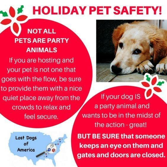Remember Not All Pets Are Party Animals Losing A Dog Pet