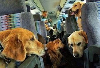 5 consejos para volar en avión con tu perro