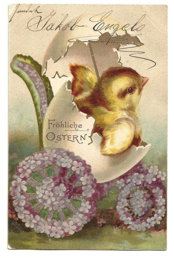 2829), Küken kommt aus Ei, 1903 | eBay