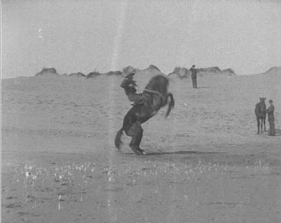 The role of the horse during WW1 cannot be underestimated. Although advances in technology meant mounted warfare was coming to an end, the cavalry were still used for reconnaissance work and carrying messages. Horses also pulled artillery, wagons and ambulances through the deep mud. By 1917, it was difficult to replace a horse and so some troops were told that the loss of a horse was more of a strategic anxiety than the loss of a soldier.