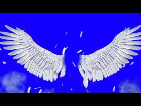 Asa Acanjo Fundo Azul Efeito Gratis Chroma Key Youtube Chroma Key White Feathers Gratis
