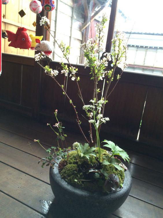 2016  旅立ちの日に 芽吹きの盆栽