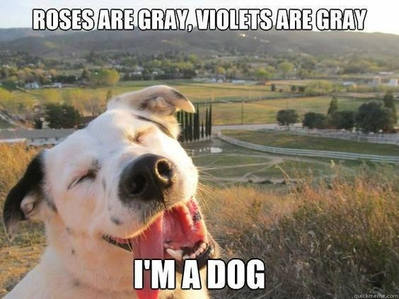 a meme on color blindness - from a dog's point of view...
