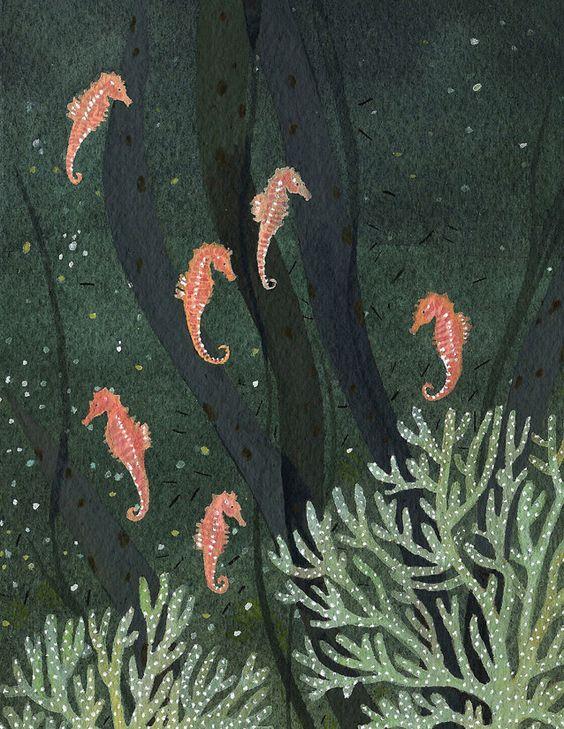 seahorse becca stadtlander