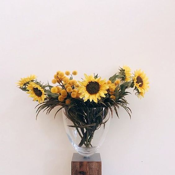 @diegopetry1 #picoftheday #sunflower #girasol #yellow #amariilo #perfection #nature #artnature #queretaro #mexico