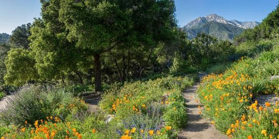 Santa Barbara Botanic Garden Image Library