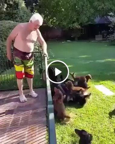 Dia de lazer dos cachorros