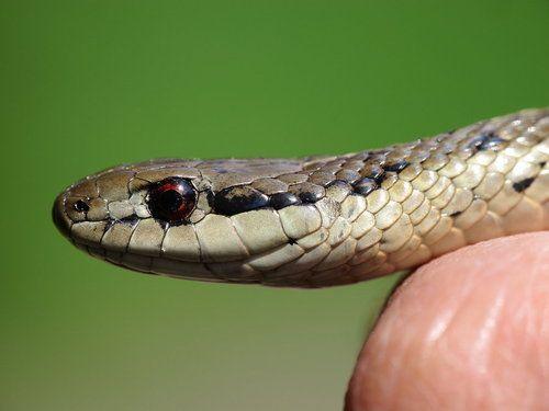 تفسير رؤية الثعبان في الحلم رؤيا الافعى في المنام Dream Images Snake Animals