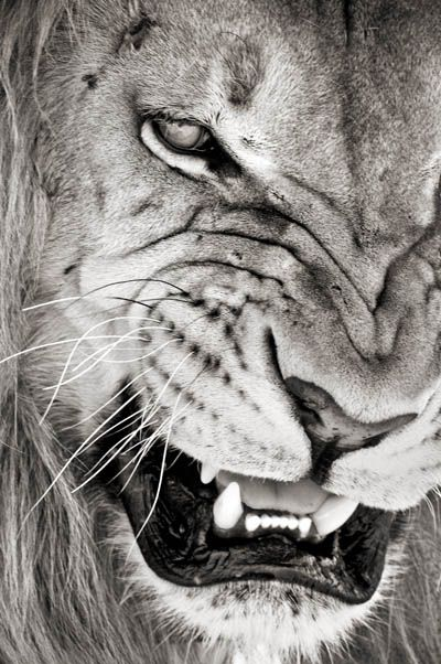 Can pure like a kitten yet roar like a lion...  don't make me show my claws