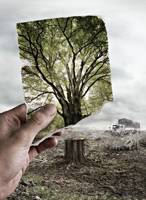 Image result for beautiful view deforestation before and after