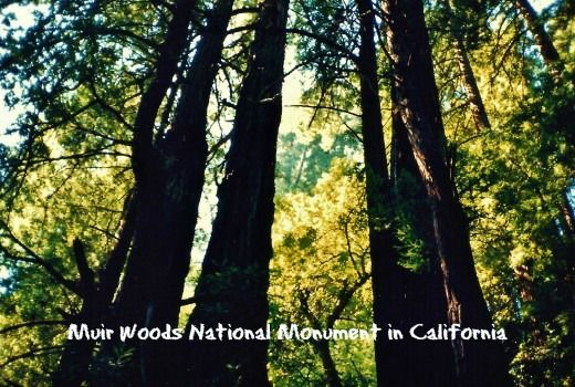 Muir Woods National Monument ~ Old Growth Forest near San Francisco
