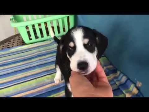 Abigail Ein Welpe In Not Aus Dem Tierschutz Youtube Hunde In Not Tierschutz Tiere