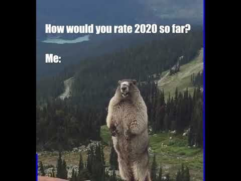 How Would You Rate 2020 So Far Youtube Scream Meme Memes Lion Sculpture