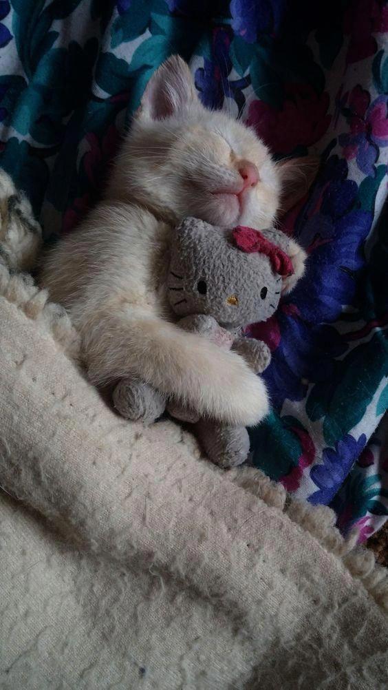 Sleep Tight My Precious Kitty Want More Cute Kittens Click The