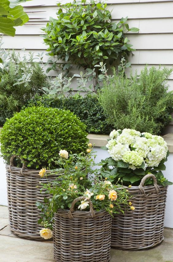 The hydrangeas look especially beautiful with this gray rattan basket treatment - Modern and Country all at the same time. Yummy! Full details on Modern Country Style blog: Leopoldina Haynes' Small Garden: