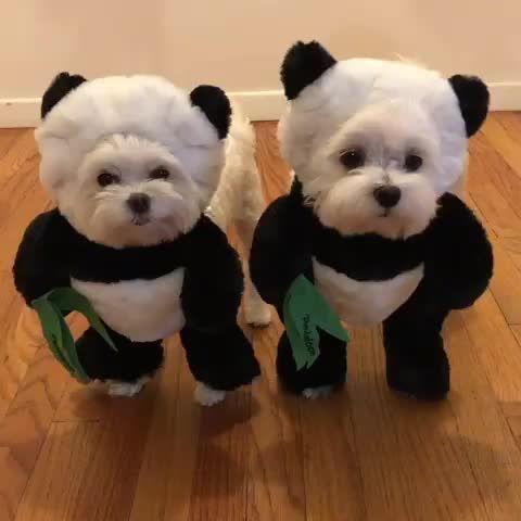 Die Besten Hundekostume Selber Machen Kostum Hund Susseste Haustiere Und Malteserwelpen
