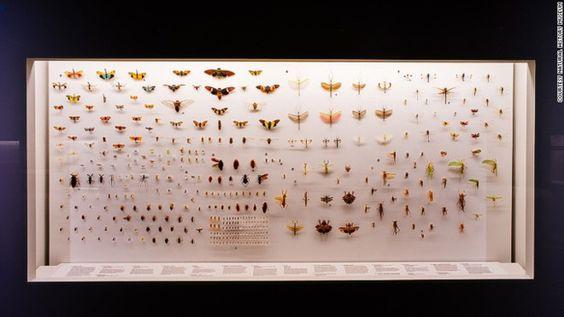 Bộ sưu tập về loài bướm trong bảo tàng
