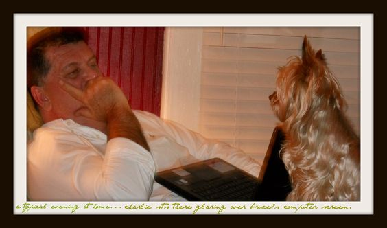 A typical evening at home....Bruce & Charley.