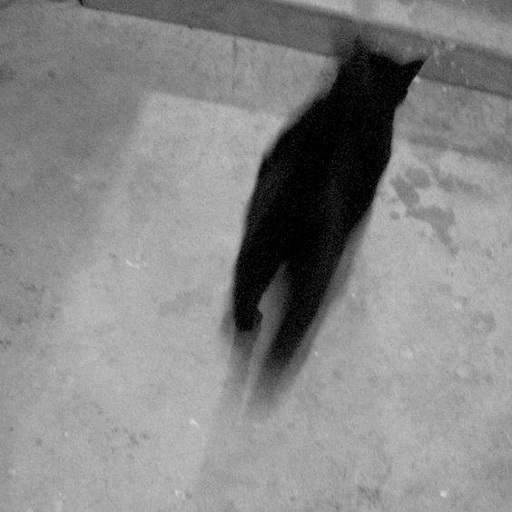 optichron:   Chat Noir Blur / Temple City, CA /... - wickey wackey woo