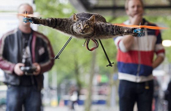 We Can Rebuild Him. We Have The Technology.  Paws For Thought: Cat Orville Was Turned Into A Helicopter By His Artist Owner.