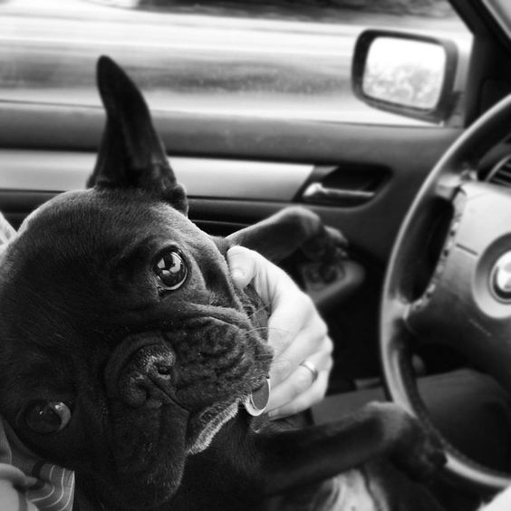 I'd let that dog drive, too.