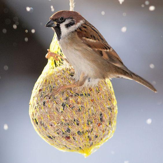 Wusstet Ihr schon dass…. …. Vögel nicht an den Füßen frieren?  Zwischen dem warmen, nach unten fließenden Blut und dem kalten, nach oben steigenden Blut findet ein Wärmeaustausch statt. #wissenswertes