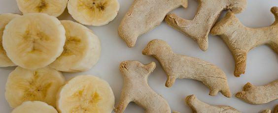 hacer recetas de galletas caseras para perros y gatos
