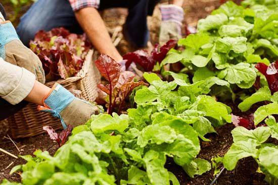 8 Ways To Garden In Harmony With Nature Organic Gardening Tips