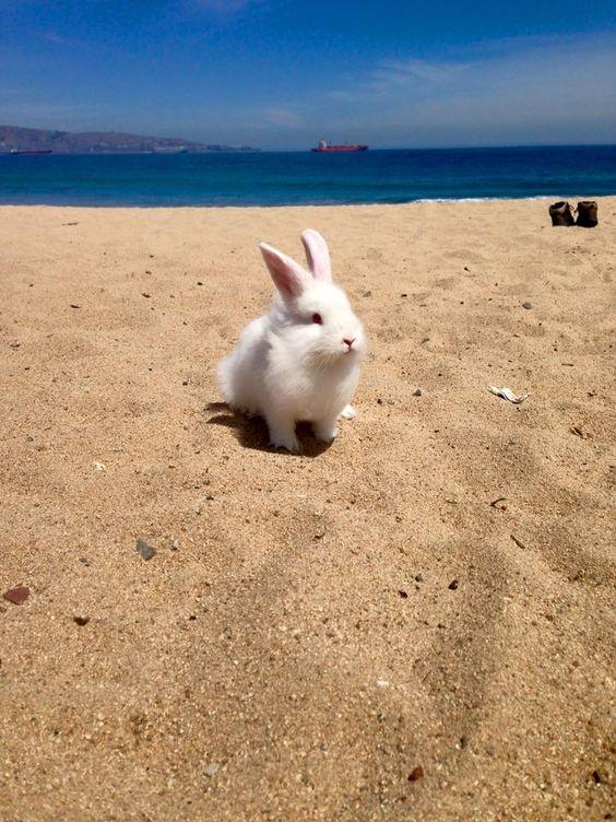 Beautiful Beach Bun
