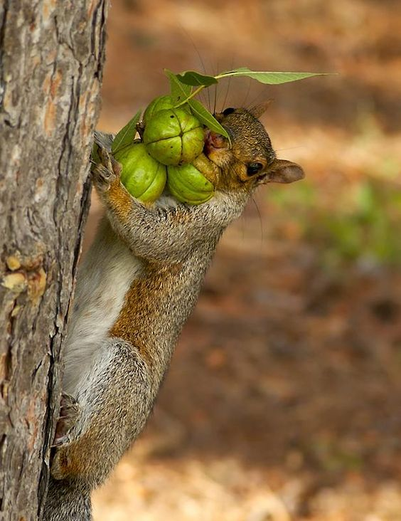 I'm just a squirrel trying to get a nut!!