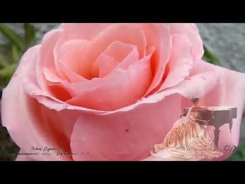 Tulipanes Mm Memorándum  Nikos Ignatiadis * Piano Instrumental music - In classic Mood *** | Famous  composers, Music instruments, Make it yourself
