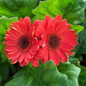 my most favorite flower everr!!!