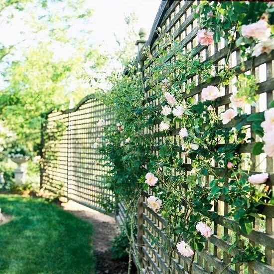 lattice fence for the deck jasmine not roses however. Black Bedroom Furniture Sets. Home Design Ideas