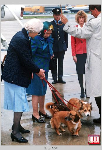 RoyalDish - Royals with Animals - page 8