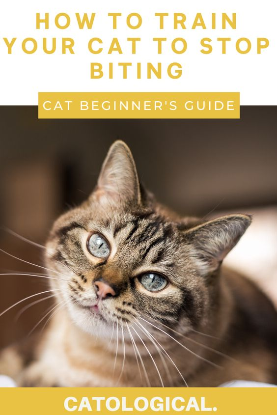 Cat Won T Stop Biting How To Get Your Kitty To Stop Biting You In 2020 Cat Skin Cats Cat Behavior