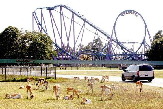 Six Flags Great Adventure Safari, New Jersey