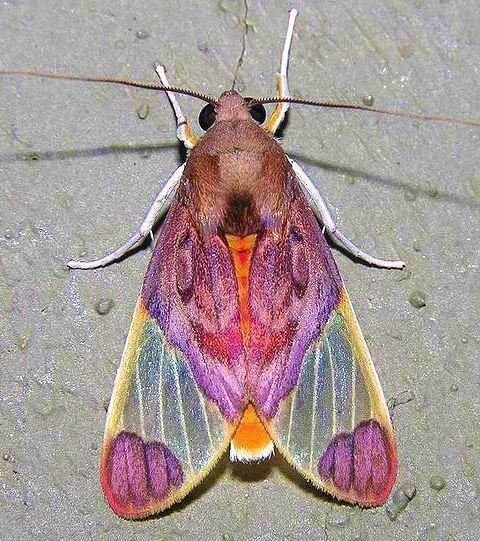 Schwarz In 2020 Nachtfalter Schmetterling Falter