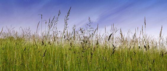 Fototapete Grassground (Nr. 14983)  www.berlintapete.de