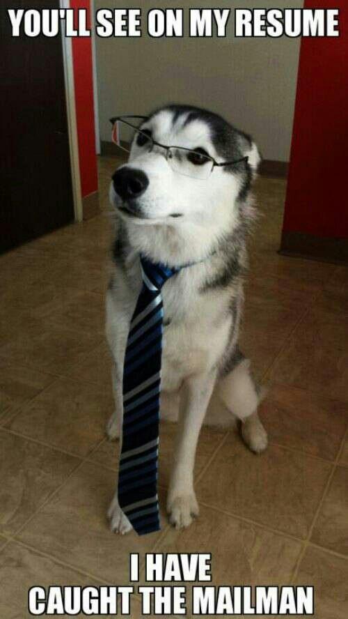 Erudite dog impresses companies.