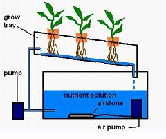 Building an NFT Hydroponic System