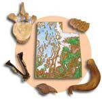 Teaching Kits/Materials from Utah Geological Survey borrow with refundable deposit.