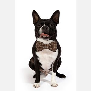 What a handsome fellow!!! this site is specifically for your pets!!!