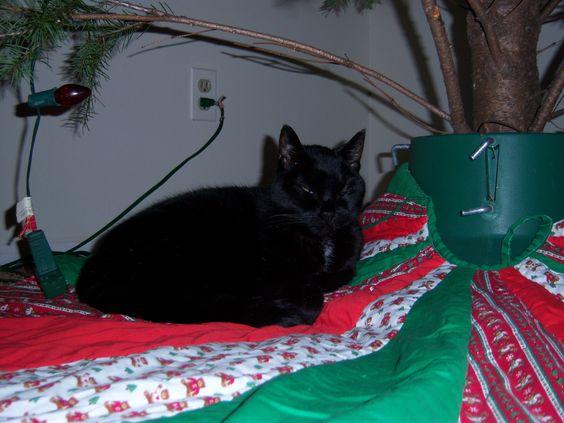 Salem loved sleeping under the Christmas tree, RIP little buddy
