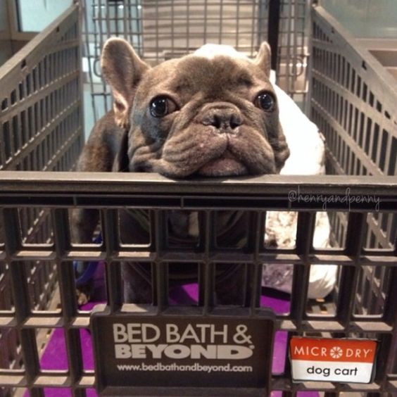 Bed Bath And Beyond Dogs Allowed