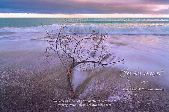 """Driftwood on a beach with inspiring quote :  """"Joy has no cost.""""  Marianne Williamson, author. Prints available at http://giovanni-allievi.artistwebsites.com/art/all/inspiring+quotes/all"""