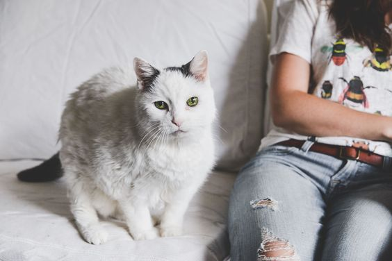 My 22 year cat who I got when I was 4 got to be in my engagement pictures. Love isn't a big enough word. <3
