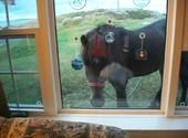 Change Islands Newfoundland Pony Sanctuary @ Aviva Community Fund .. Please help these Beautiful Newfoundland Ponies get a new Barn.. It is badly needed.. Please like and vote ...
