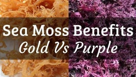 An Interesting Difference To Note Is That All Purple Sea Moss Comes Out The Sea Purple The Same Cannot Be Said For All Gold Sea Moss Alkaline Foods Irish Sea