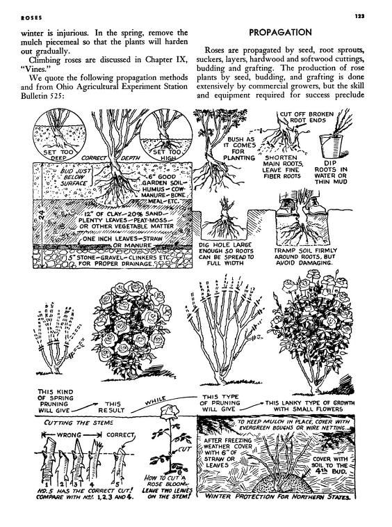 Complete Book Of Garden Magic Biles Roy E Free Download Borrow And Streaming Internet Archive Internet Archive The Borrowers Vintage Garden