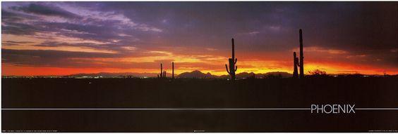 Phoenix Sunset with Cactus Poster Arizona Desert Art Print (12x36) $4.18 - Save:$17.80 (81%)